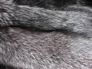 Лисица  серебристо-черная Мех лисицы отличается особым блеском и густым, пышным, шелковистым волосяным покровом.